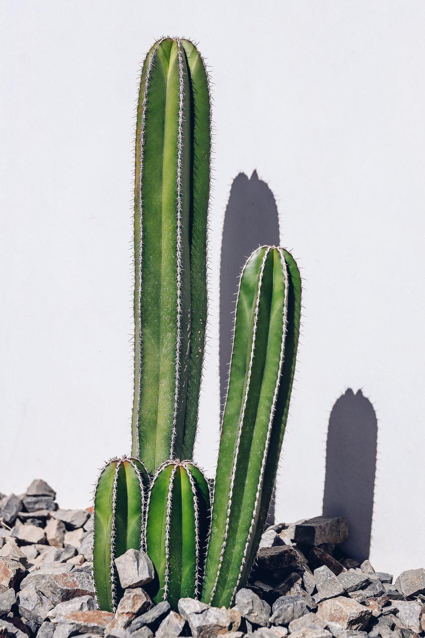 pastel in palm springs vivaluxury